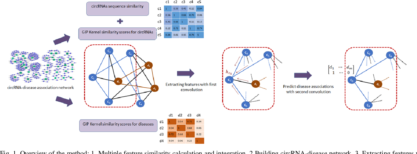 Figure 1 for Graph Convolution Networks Using Message Passing and Multi-Source Similarity Features for Predicting circRNA-Disease Association