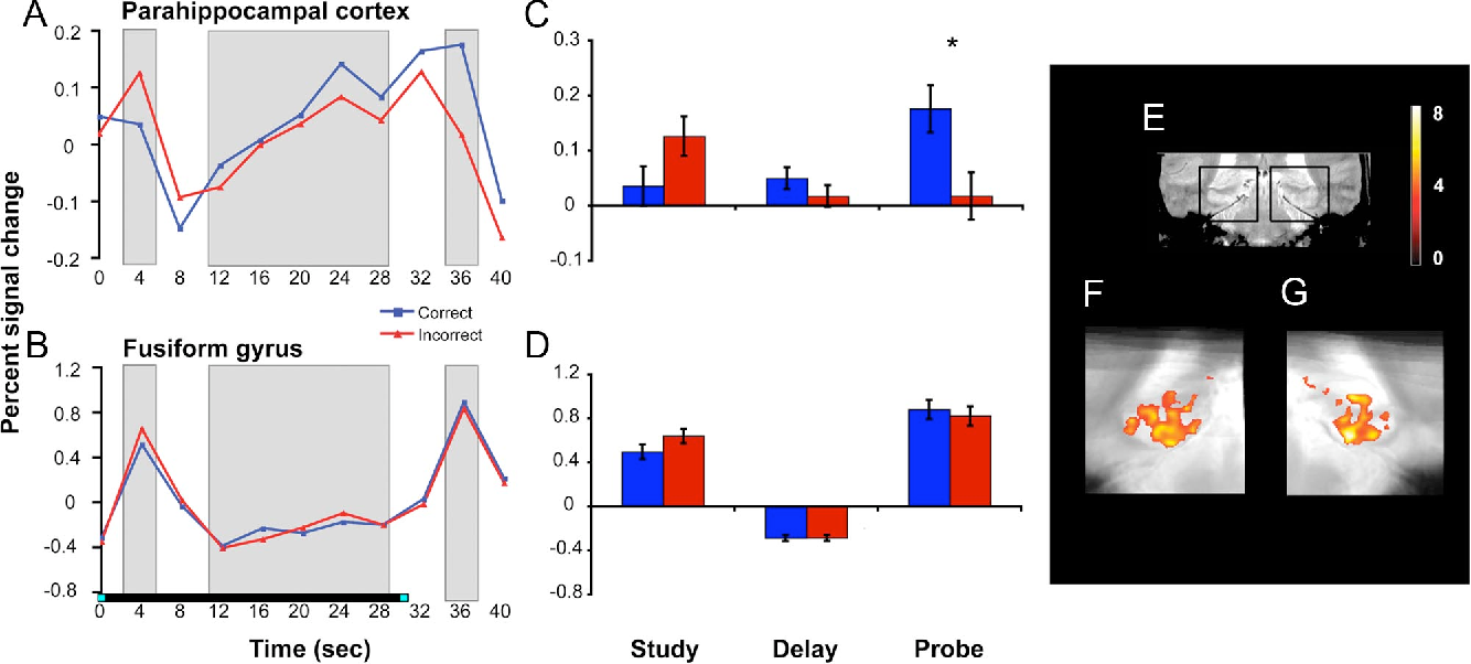 Figure 4. Linearly increasing delay period activity and performance-related probe period activity in parahippocampal cortex and fusiform gyrus. The left (A, B) and middle (C, D) panels display the BOLD response in anatomically defined parahippocampal cortex and functionally defined fusiform gyrus. The delay period response linearly increased with time (A, B), and the probe period response was greater on correct versus incorrect trials (*p $ 0.05). E displays a coronal slice through a representative participant's T2-weighted in-plane anatomical image, with black boxes demarcating the MTL regions featured in F and G. F and G display group-level voxel-based analyses revealing clusters in left and right parahippocampal cortex and posterior hippocampus that demonstrated linearly increasing activity across the delay period (voxel threshold: p $ 0.001, uncorrected; cluster threshold: p $ 0.05, corrected). The underlay is the group mean-transformed in-plane structural image.