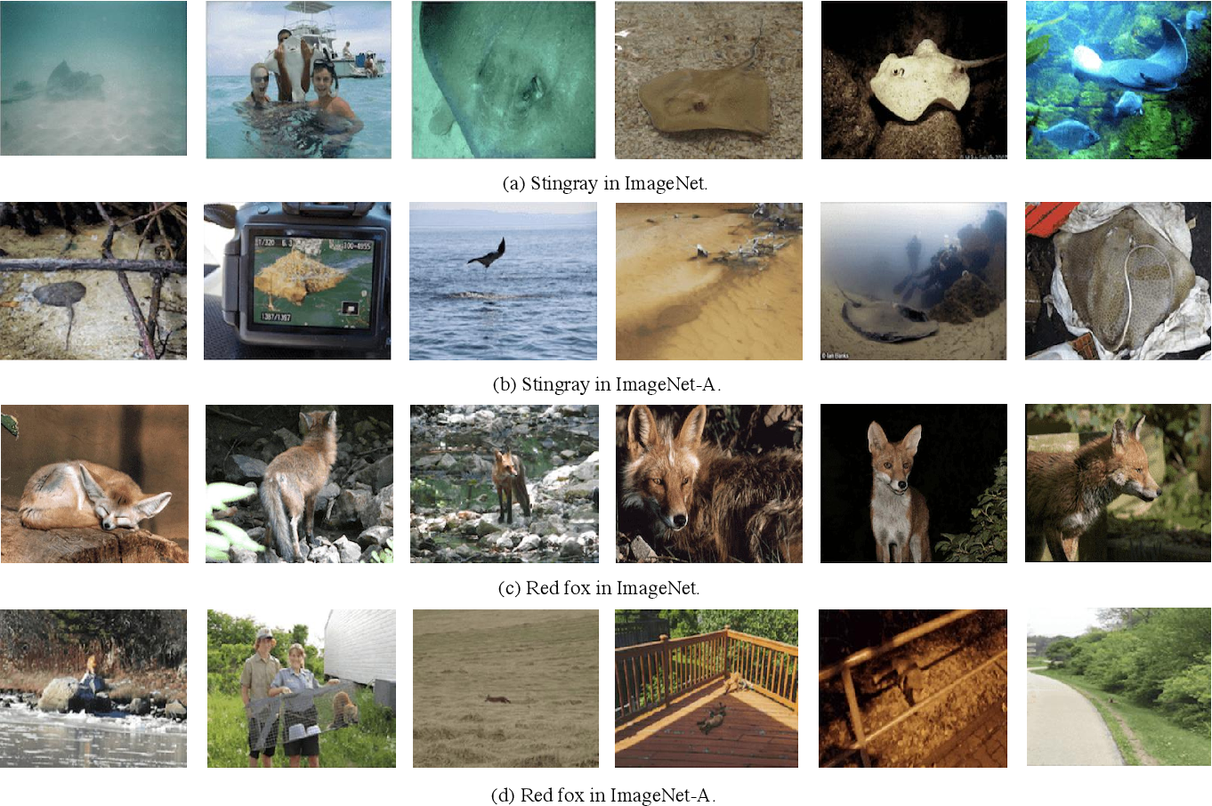 Figure 1 for Rethinking Natural Adversarial Examples for Classification Models