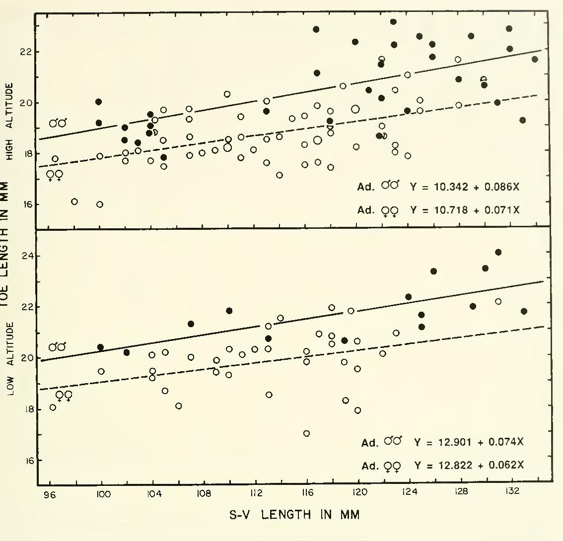 Figure 13 from Altitudinal ecology of Agama tuberculata Gray