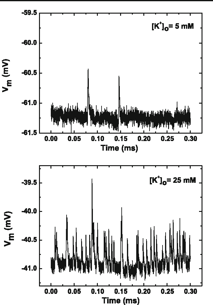Fig. 2 Representative recording segments of MEPPs. Top Time series interval during control solution ([K+]o = 5mM); bottom typical segment with elevated [K+]o (25mM)