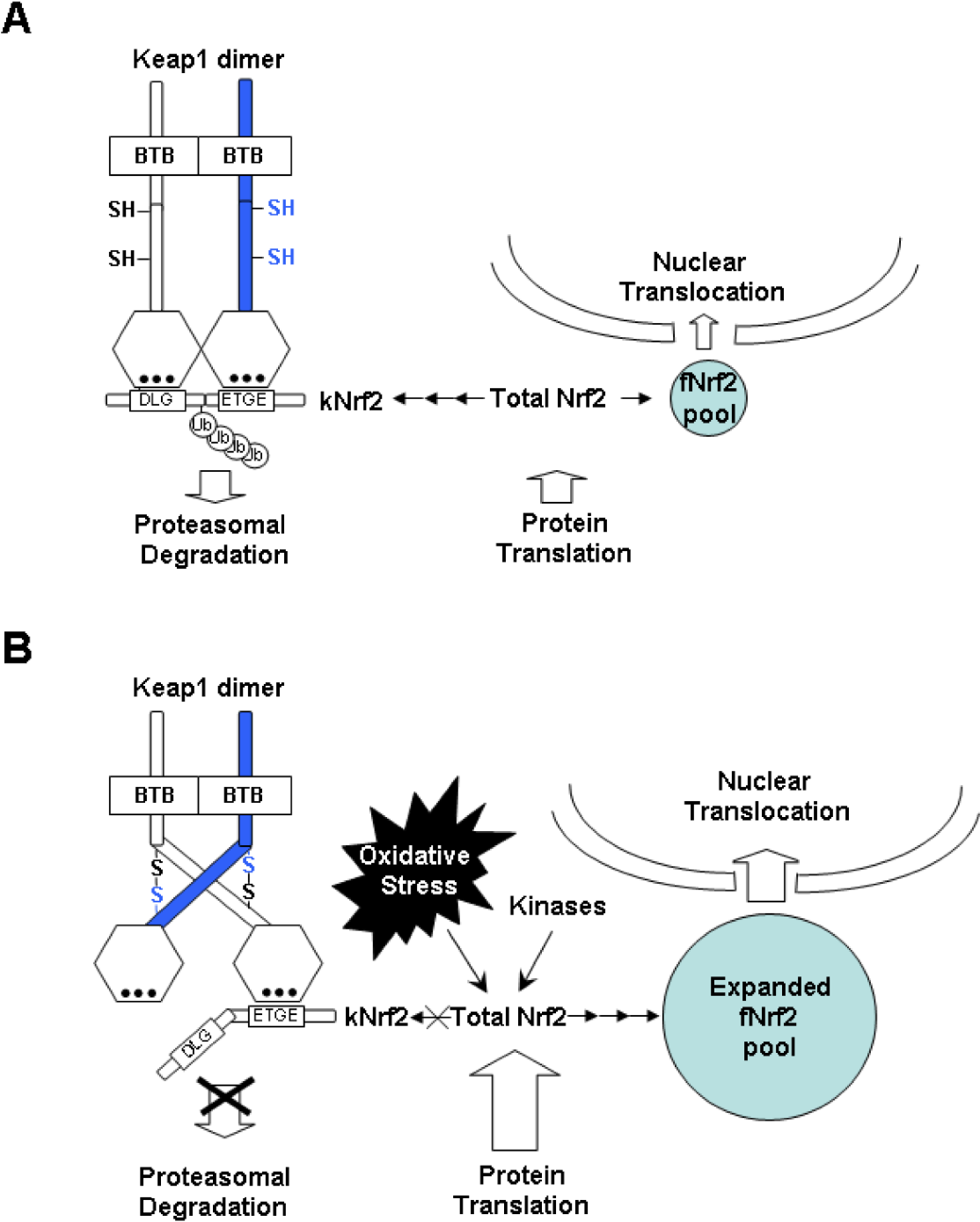 Figure 3 From Molecular Mechanisms Of Nrf2-mediated