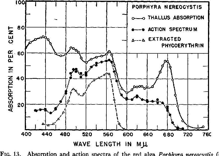 Photosynthetic Action Spectra Of Marine Algae Semantic Scholar