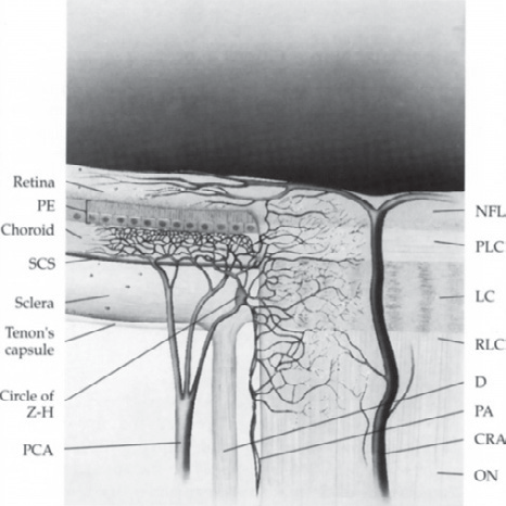 Figure 1 from Vascular anatomy of the optic nerve head. - Semantic ...