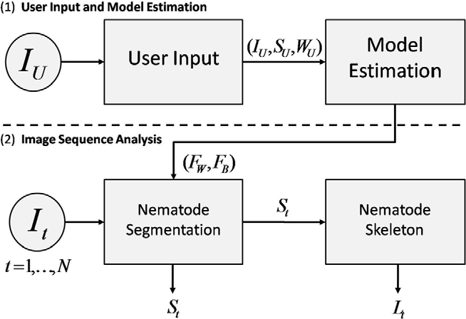 Figure 3 for Multi-environment model estimation for motility analysis of Caenorhabditis Elegans