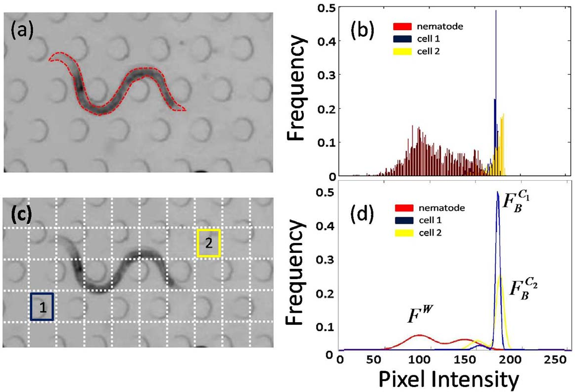 Figure 4 for Multi-environment model estimation for motility analysis of Caenorhabditis Elegans