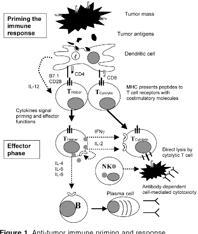 Figure 1 from Lung cancer immunotherapy  - Semantic Scholar