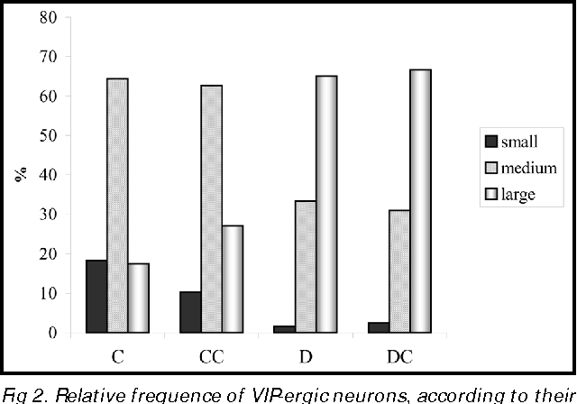 Fig 2. Relative frequence of VIP-ergic neurons, according to their sizes - small, medium and large - of non-diabetic animals (C), non-diabetic animals treated with acetyl-L-carnitine (CC), diabetic animals (D) and diabetic treated with acetyl-L carnitine (DC). n = 5 rats per group.