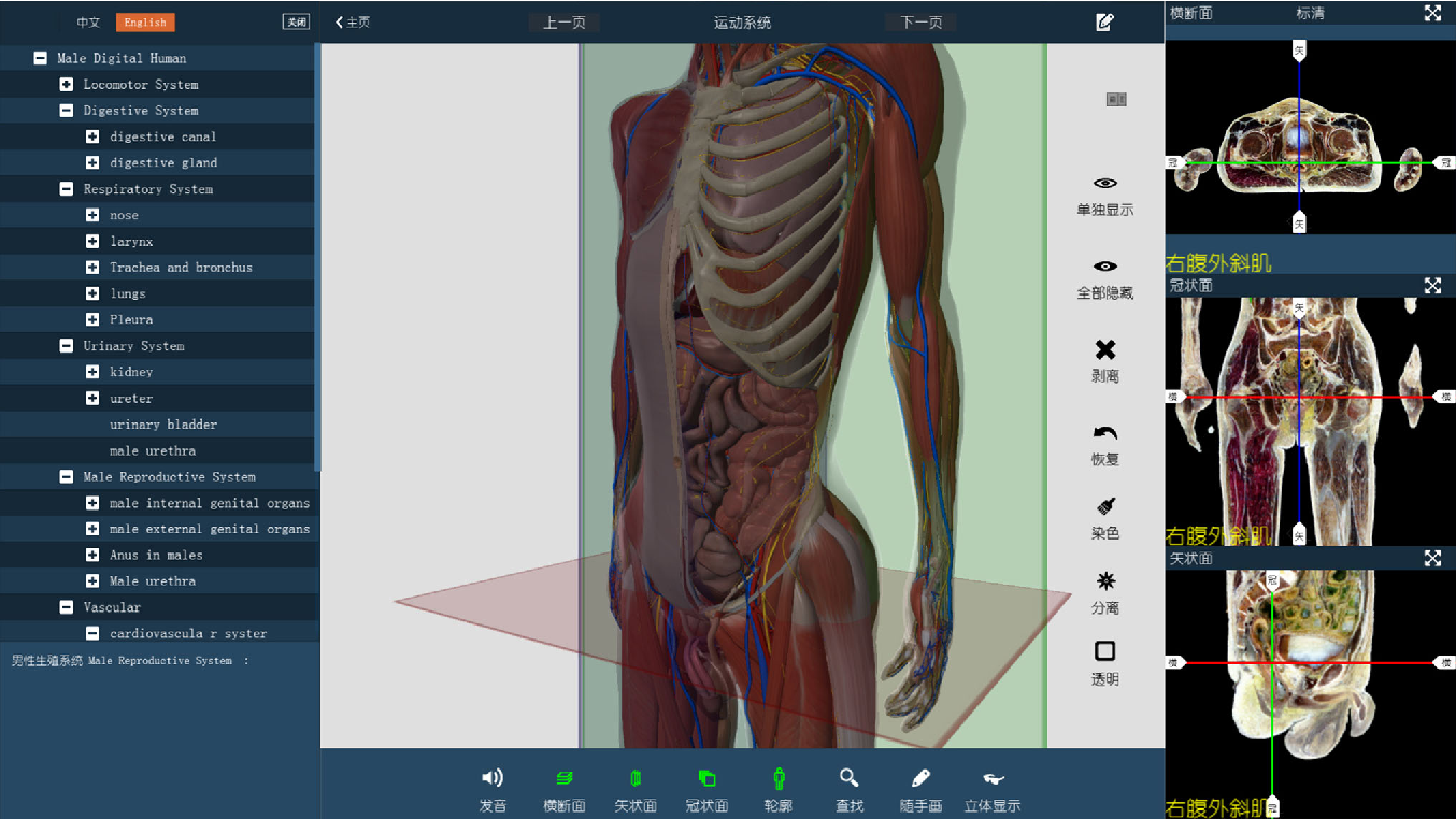 Creation Of A Virtual Anatomy System Based On Chinese Visible Human