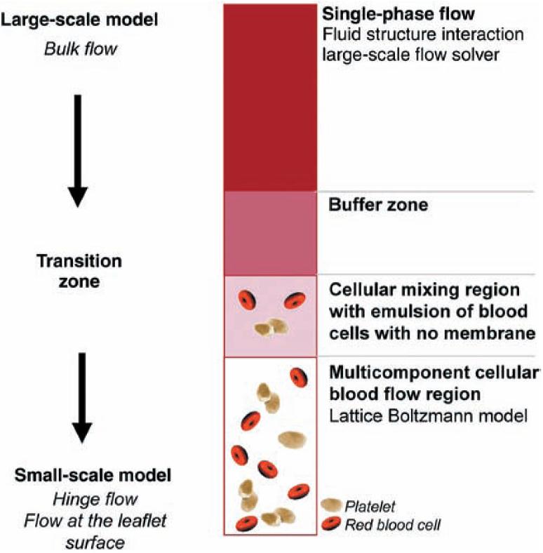 Figure 5 from Fluid mechanics of artificial heart valves
