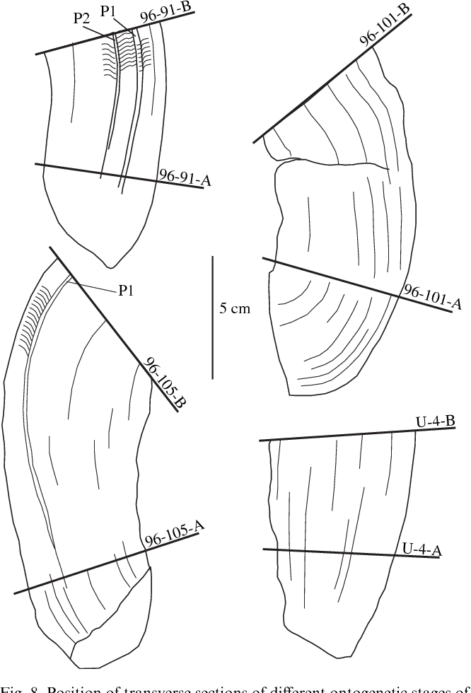 Figure 8 From First Record Of Upper Turonian Rudists Mollusca