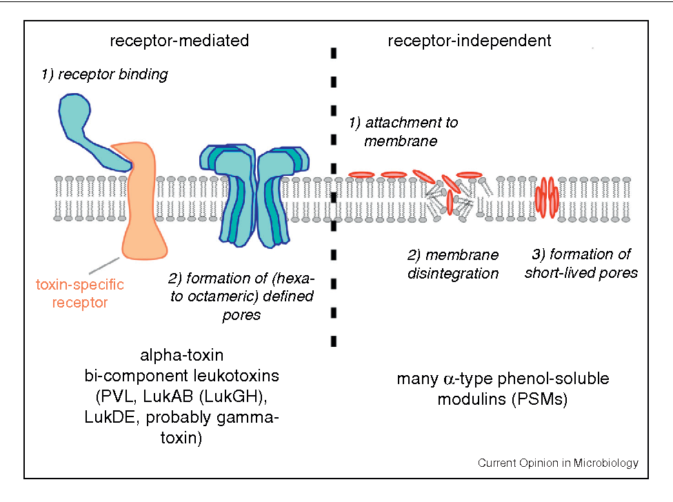 Figure 1 from Staphylococcus aureus toxins. - Semantic Scholar Artificial Academy 3