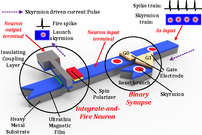 Figure 1 for Developing All-Skyrmion Spiking Neural Network