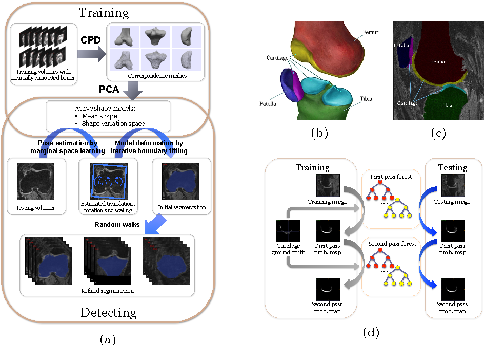 Figure 2 for Semantic Context Forests for Learning-Based Knee Cartilage Segmentation in 3D MR Images