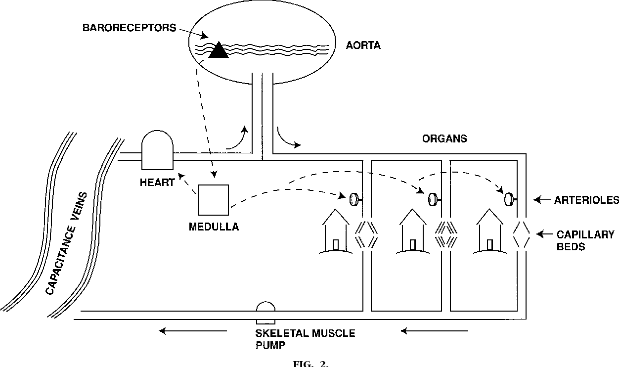The Water Tower Analogy Of The Cardiovascular System Semantic Scholar