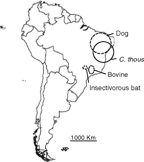 Comparative Analysis Of Rabies Virus Isolates From Brazilian Canids
