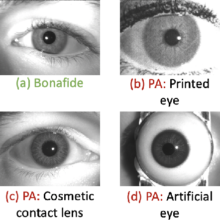 Figure 1 for CIT-GAN: Cyclic Image Translation Generative Adversarial Network With Application in Iris Presentation Attack Detection