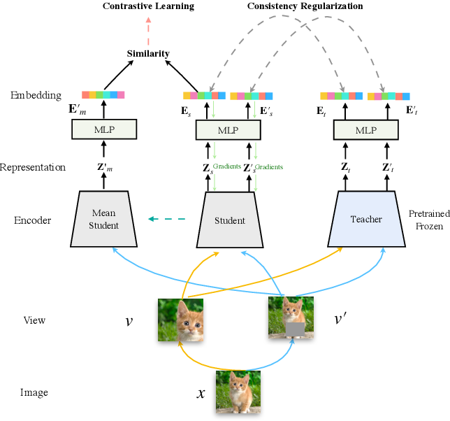 Figure 3 for DisCo: Remedy Self-supervised Learning on Lightweight Models with Distilled Contrastive Learning