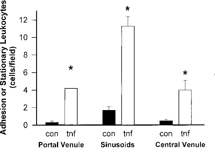 Molecular Mechanisms Of Tumor Necrosis Factor Alpha Stimulated