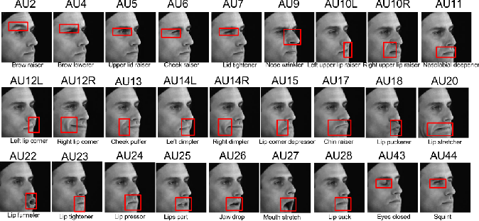 Figure 2 for Linear Disentangled Representation Learning for Facial Actions