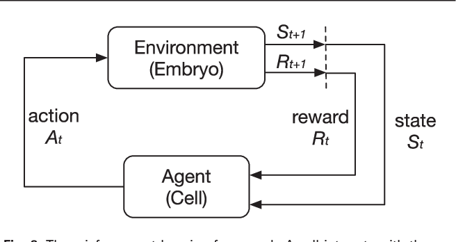 Figure 2 for Deep Reinforcement Learning of Cell Movement in the Early Stage of C. elegans Embryogenesis