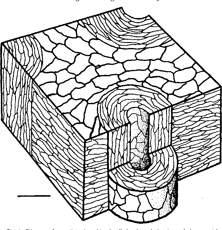Figure 1 From Fracture Toughness Design In Horse Hoof Keratin