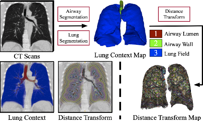 Figure 4 for Learning Tubule-Sensitive CNNs for Pulmonary Airway and Artery-Vein Segmentation in CT