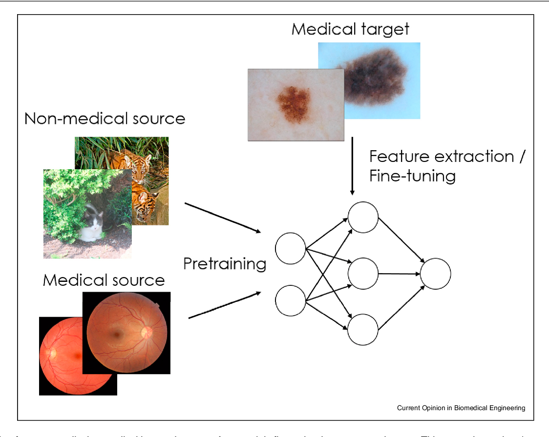 Figure 1 for Cats or CAT scans: transfer learning from natural or medical image source datasets?