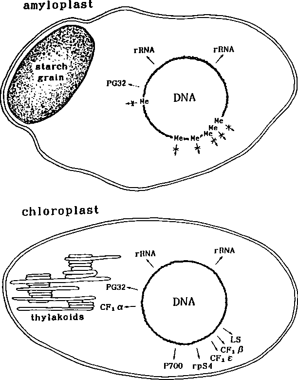 4 Figure6 1 figure 6 from dna methylation as a mechanism of transcriptional