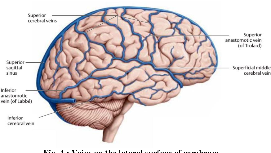 Malignant Lesions of the Scalp : Surgical Management of the Deeply ...