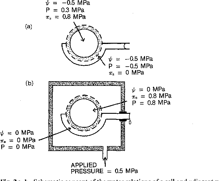 Figure 2 From Measurement Of Plant Water Status By The Pressure