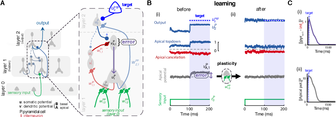 Figure 1 for Dendritic cortical microcircuits approximate the backpropagation algorithm