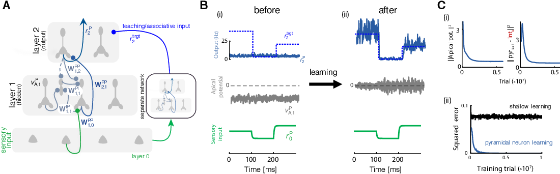 Figure 2 for Dendritic cortical microcircuits approximate the backpropagation algorithm