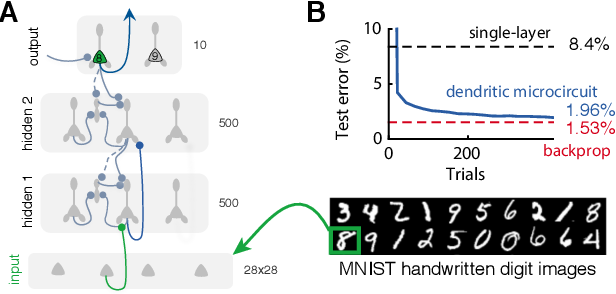 Figure 3 for Dendritic cortical microcircuits approximate the backpropagation algorithm