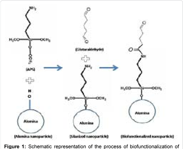 Figure 1 From Nad H Linked Enzyme Catalyzed Reactions