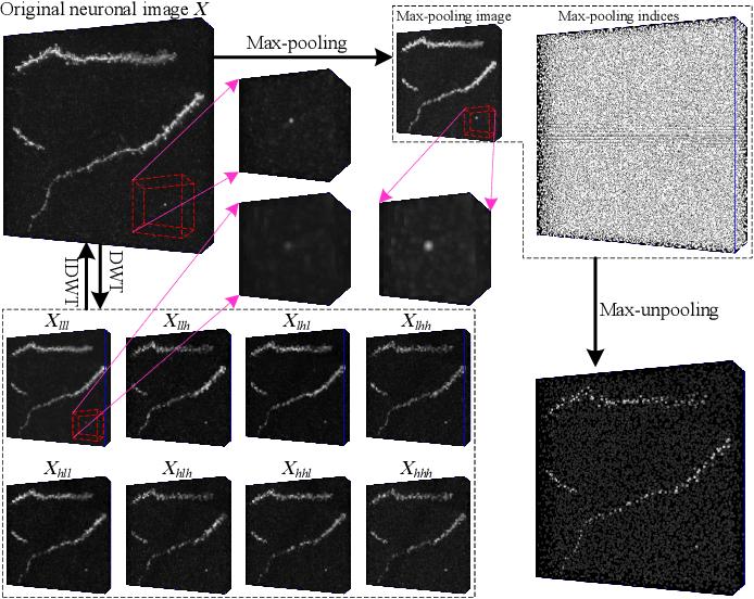 Figure 2 for 3D WaveUNet: 3D Wavelet Integrated Encoder-Decoder Network for Neuron Segmentation