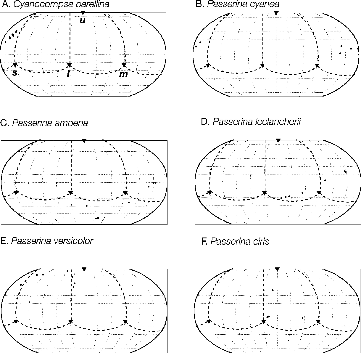 Figure 5: Robinson projections of the hues of the plumage patches of males of six species of Cyanocompsa and Passerina buntings. A, Cyanocompsa parellina; B, Passerina cyanea; C, Passerina amoena; D, Passerina leclancherii; E, Passerina versicolor ; F, Passerina ciris. The distribution of dots indicates the variation in hue among the colors of the plumage patches of each species, given by the azimuth and elevation angles v and f, equivalent to longitude and latitude, respectively. The hue vectors are projected onto a sphere centered at the achromatic origin, and the sphere is depicted using the Robinson projection, a two-dimensional representation of the surface of the earth. Triangles indicate the u, s, m, and l vertices of the tetrahedron (labeled in A). The dotted lines indicate the spherical projection of the four edges of the color tetrahedron. The data are projected as if the observer were looking downward onto the equator of the spherical surface.