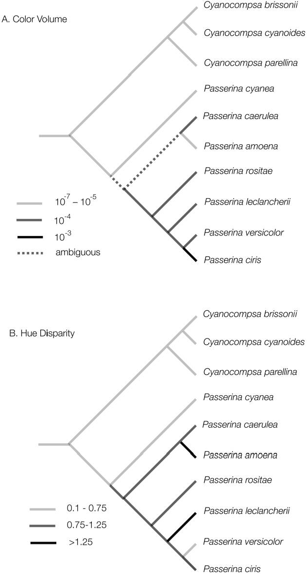 Figure 7: Linear parsimony optimizations of the evolution of two continuous color space variables for species of Cyanocompsa and Passerina buntings on the phylogeny of Klicka et al. (2001). A, Color volume; B, average hue disparity.