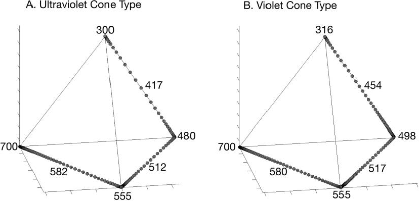 Figure 9: Tetrahedral plot of color points for monochromatic illumination across the avian visible spectrum from 300 to 700 nm in the avian UV cone–type visual system (A) and avian violet cone–type visual system (B); sensitivity curves from Endler and Mielke (2005). The wavelengths labeled are for the vertices and the chromatic minima (see fig. 8), which are positioned along an edge of the tetrahedron between vertices. The two types of avian visual systems differ principally in the mapping of shorter, nonultraviolet, visible wavelengths (400–500 nm) into the tetrahedral color space.