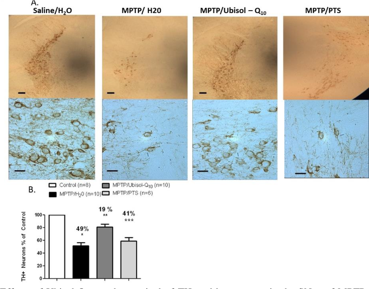 Figure 8 Effects of Ubisol-Q10 on the survival of TH-positive neurons in the SNpc of MPTPtreated DJ-1 deficient mice. Four weeks prior to the MPTP injections mice were given regular drinking water, water supplemented with Ubisol-Q10 or with PTS. Subsequently they were injected with either MPTP or saline (6 daily injections). The supplementations with Ubisol-Q10 and PTS continued for the additional 4 weeks until the termination of the experiments. Four groups of mice were examined: (i) saline/H20 (saline injected and drinking regular water, control); (ii) MPTP/H2O (MPTP injected drinking regular water, unprotected); (iii) MPTP/Ubisol-Q10 (MPTP injected receiving Ubisol-Q10 supplementation, protected) and MPTP/PTS (MPTP injected receiving PTS placebo). (A) Representative photomicrographs of anti-tyrosine hydroxylase stained brain sections taken at lower and higher magnifications and showing normal distribution of TH-positive neurons in control brains (saline/H20), significantly reduced TH immunostaining reflection the loss of DA neurons in unprotected brains (MPTP/H20) and preservation of TH-positive cell bodies and neuronal fibres in the Ubisol–Q10 protected brains (MPTP/Ubisol-Q10). All mice were dissected one month after the last injection. The bars are: 200 µm in the upper (low magnification) panel and 20 µm in the lower (high magnification) panel. (B) Survival of TH-positive neurons in the SNpc calculated using the Stereologer 2000 software. Every 4 th section of the midbrain (sectioned at 30 microns thickness) was analysed, in total 12 sections per each mice. The number of TH positive neurons in each experimental group of animals was established and the results are expressed as percentage of neurons found in the SNpc of control brains (saline/H20). The data showed 49% decline in the