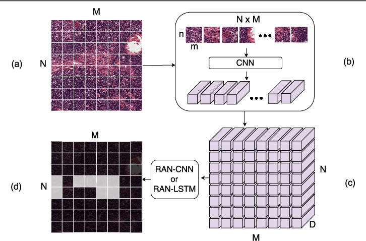 Figure 3 for Representation-Aggregation Networks for Segmentation of Multi-Gigapixel Histology Images