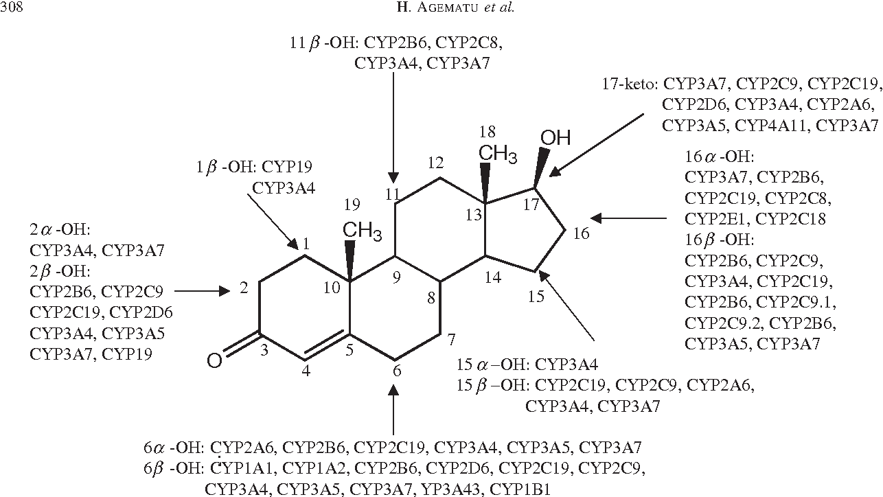 Hydroxylation of testosterone by bacterial cytochromes p450 using figure 1 ccuart Image collections