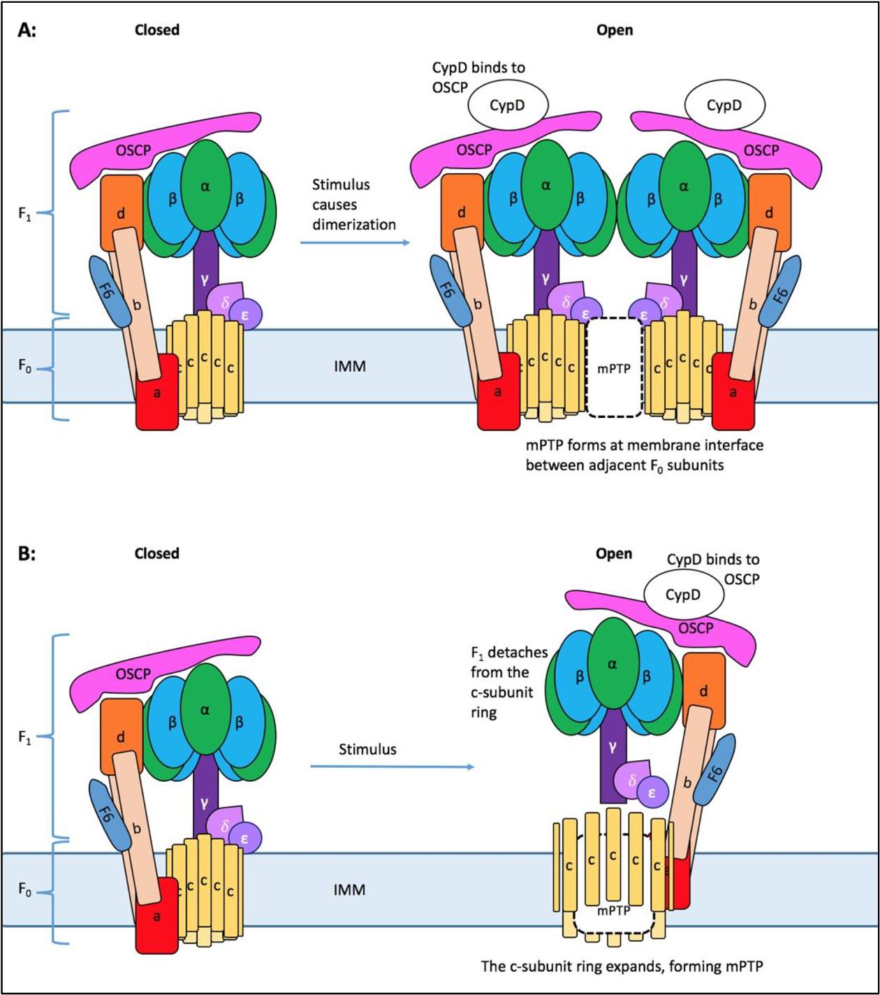 PDF] Mitochondrial calcium uptake pathways as a potential