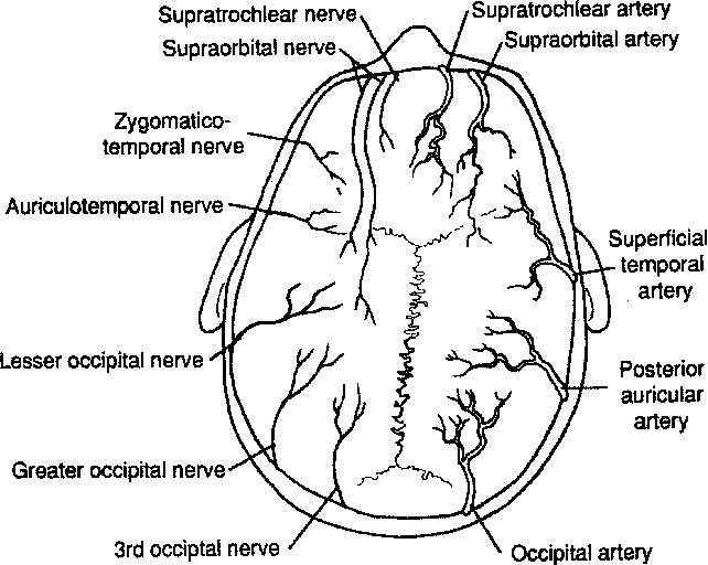 Surgical Anatomy And Technique Semantic Scholar