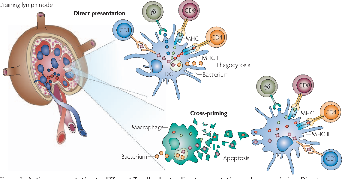 Figure 3 from The contribution of immunology to the rational design