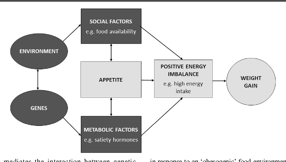 sociological theory of obesity Obesity in new zealand has become a major it will then give a brief explanation of sociological theories looking at obesity from a structural.