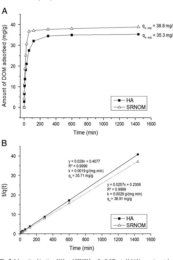 Fig. 3. Adsorption kinetics of HA and SRNOM on Fe2O3NPs at pH 4 (A) experimental results and (B) pseudo second-order kinetic model.