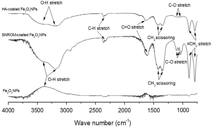 Fig. 5. FTIR spectra of bare Fe2O3NPs, HA-coated Fe2O3NPs and SRNOM-coated Fe2O3NPs.