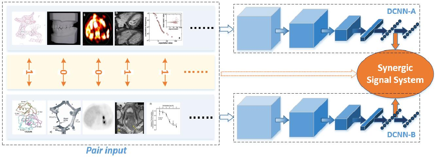 Figure 4 for Classification of Medical Images and Illustrations in the Biomedical Literature Using Synergic Deep Learning
