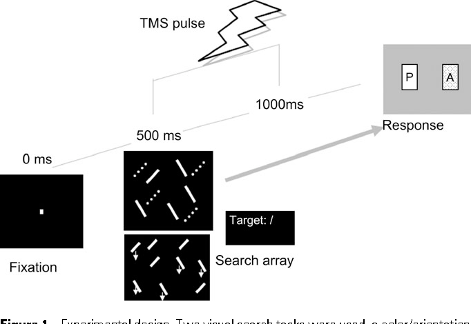 Figure 1. Experimental design. Two visual search tasks were used, a color/orientation and a motion/orientation conjunction task. The targets were a red, stationary slash (solid /) and a downward moving slash (/), respectively. The array was preceded by a fixation point visible for 500 ms. TMS was applied in either double pulse or repetitive pulse form in the 500-ms interval poststimulus array onset.